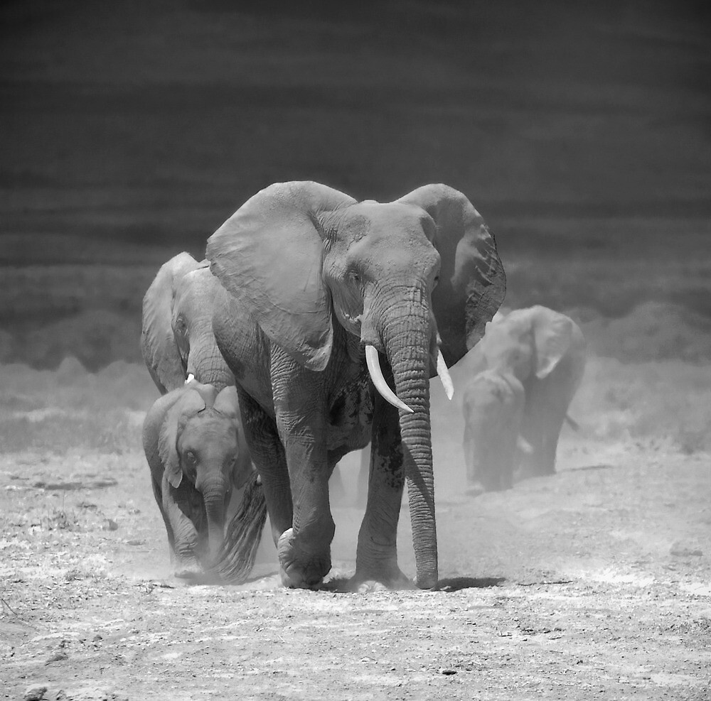 Elephants at Amboseli, Kenya by javarman