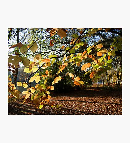 Autumn Curtain Photographic Print