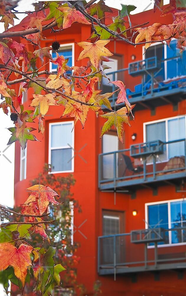 San Diego Winter Foliage by Heather Friedman