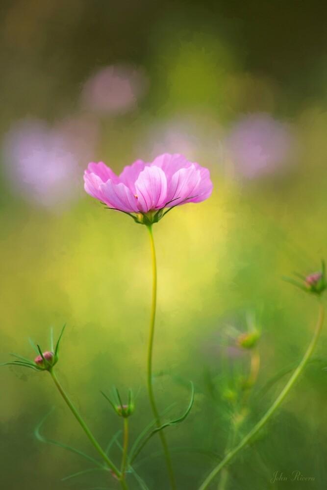 Delicate Beauty by John Rivera