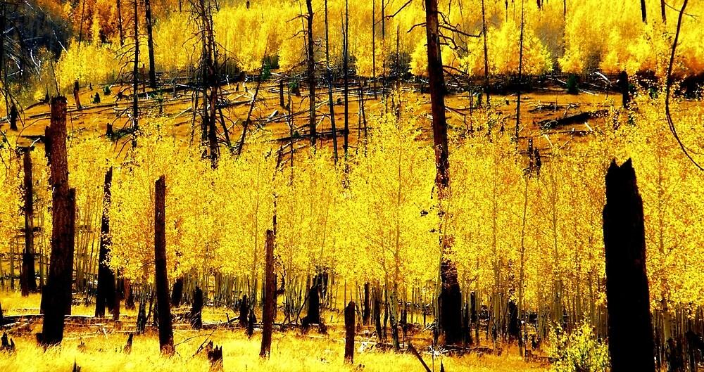 Yellow by Gina Dazzo