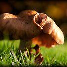 Autumn by Simon Marsden