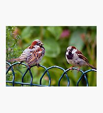 mr and mrs bird Photographic Print