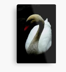 Among My Swan Metal Print