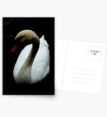 Among My Swan Postcards