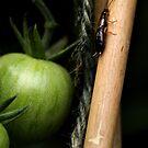 I Got A Earwig...On A Stick by sammythor