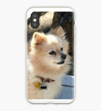 Pomeranian dog iPhone-Hülle & Cover