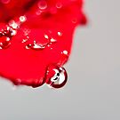 Drops on Red by Ubernoobz