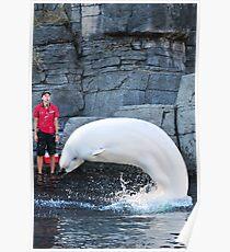 Beluga at Vancouver Aquarium Poster