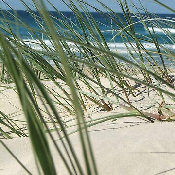 Beach Grass by k1m6erley