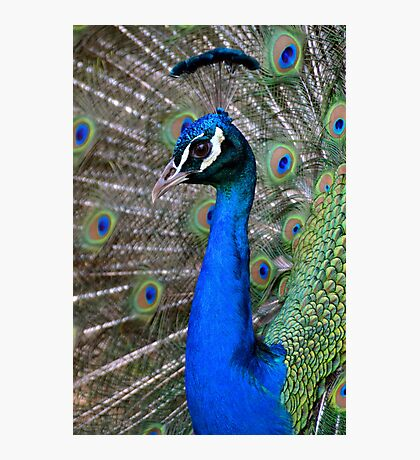 Brilliant Blue Photographic Print