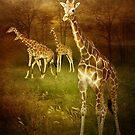 African Sun - Giraffe by KBritt