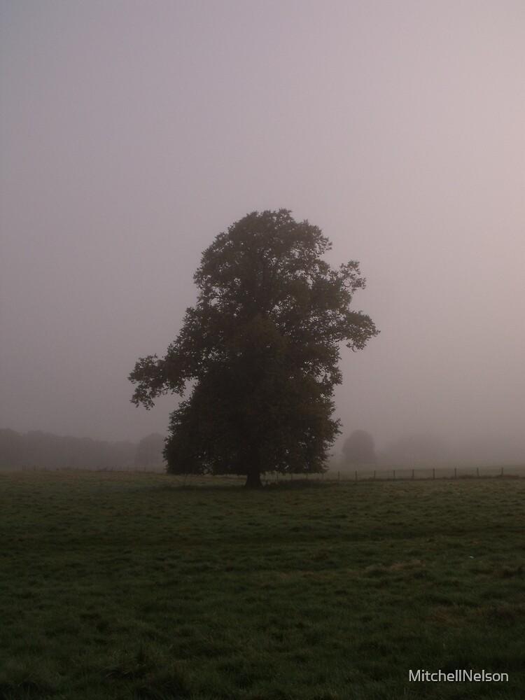 Foggy Field 1 by MitchellNelson