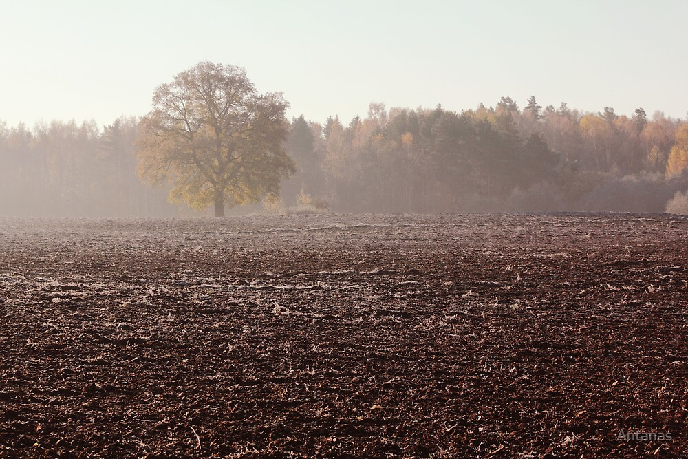 Lonely oak in frosty day by Antanas