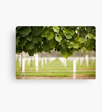 Australian Vineyard  Canvas Print