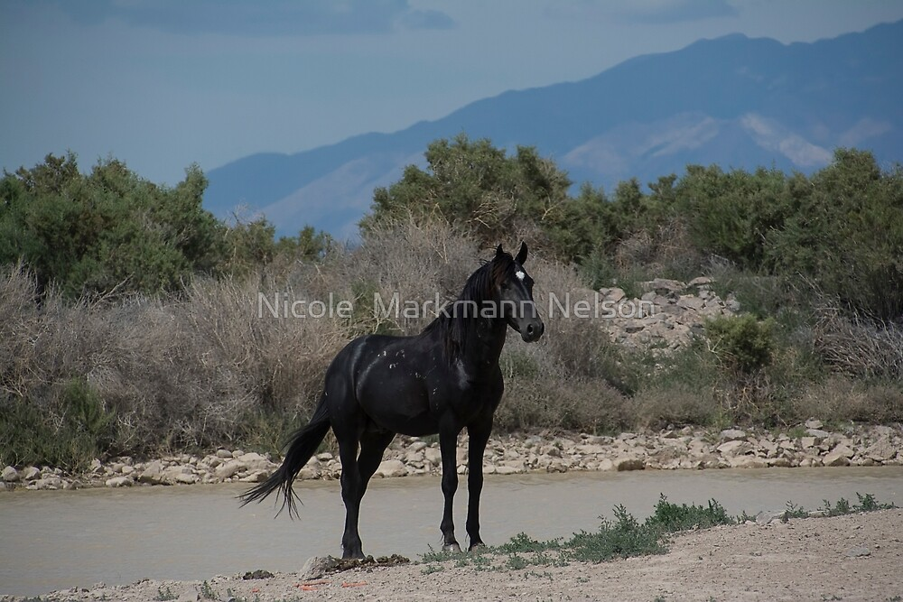 Black Beauty  by Nicole  Markmann Nelson
