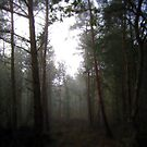 Into the forest by davidbunting