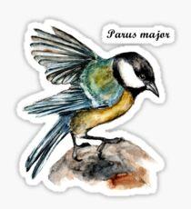 Parus Major Sticker