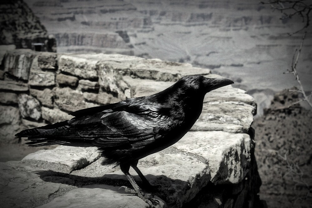 Raven Of The Canyon by Gina Dazzo