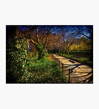In The Conservatory Garden Photographic Print