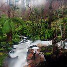 Cora Lynn Falls by Alex Wise