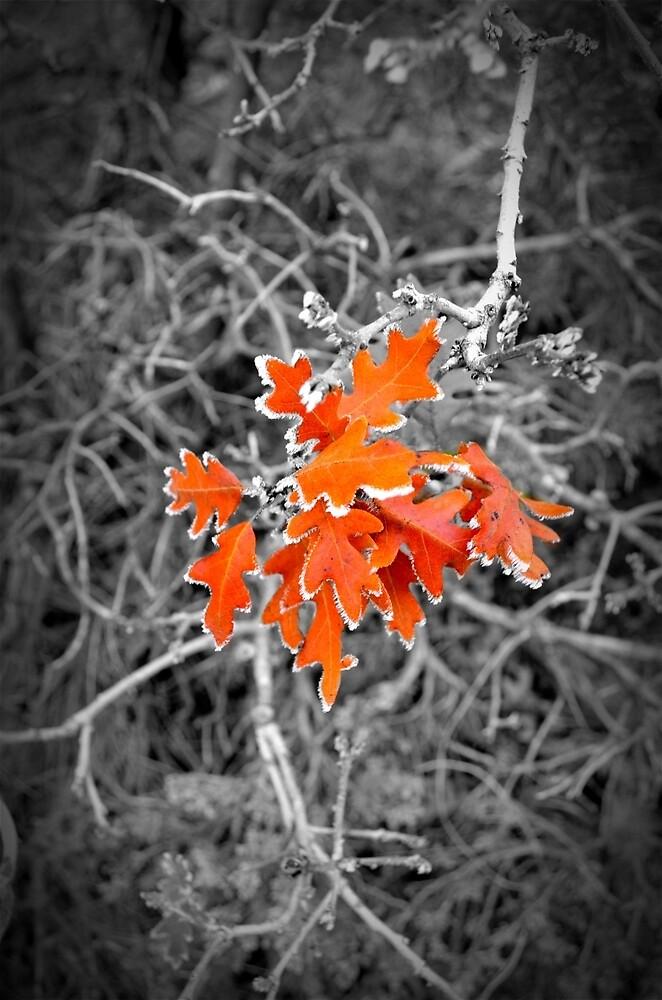 Winter Frost by Gina Dazzo