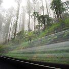 Yarra Valley Fog by Alex Wise