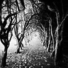 tree tunnel by Michelle McMahon
