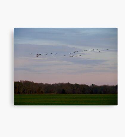 Geese Fly Over the Turf Farm at Dusk - West Kingston - Rhode Island Canvas Print