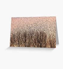 Murmuration of Starlings at Gretna Greeting Card
