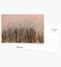 Murmuration of Starlings at Gretna Postcards