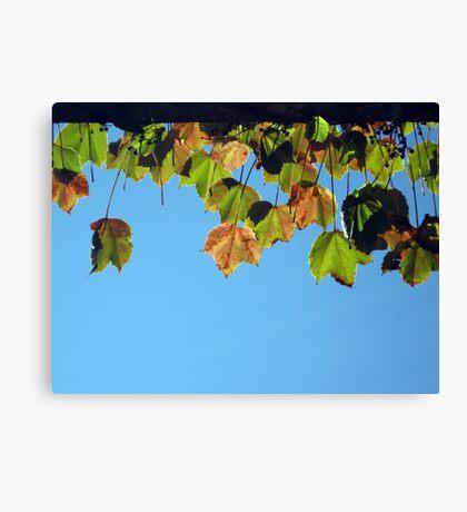 Sunning Autumn Leaves Canvas Print