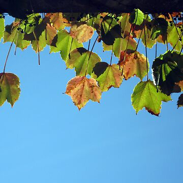 Sunning Autumn Leaves by Zapata