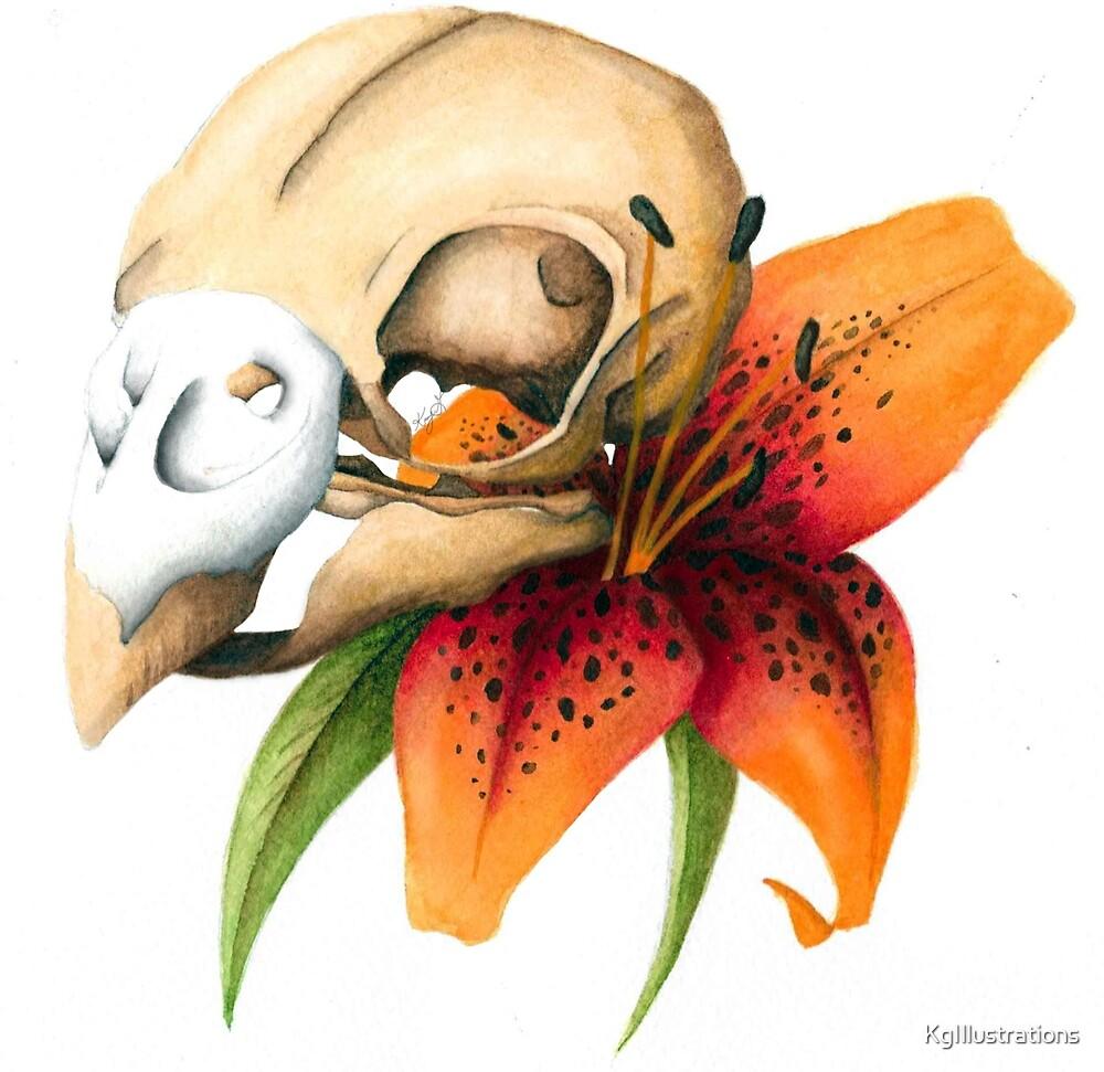 Parakett skull and Lilly by KgIllustrations