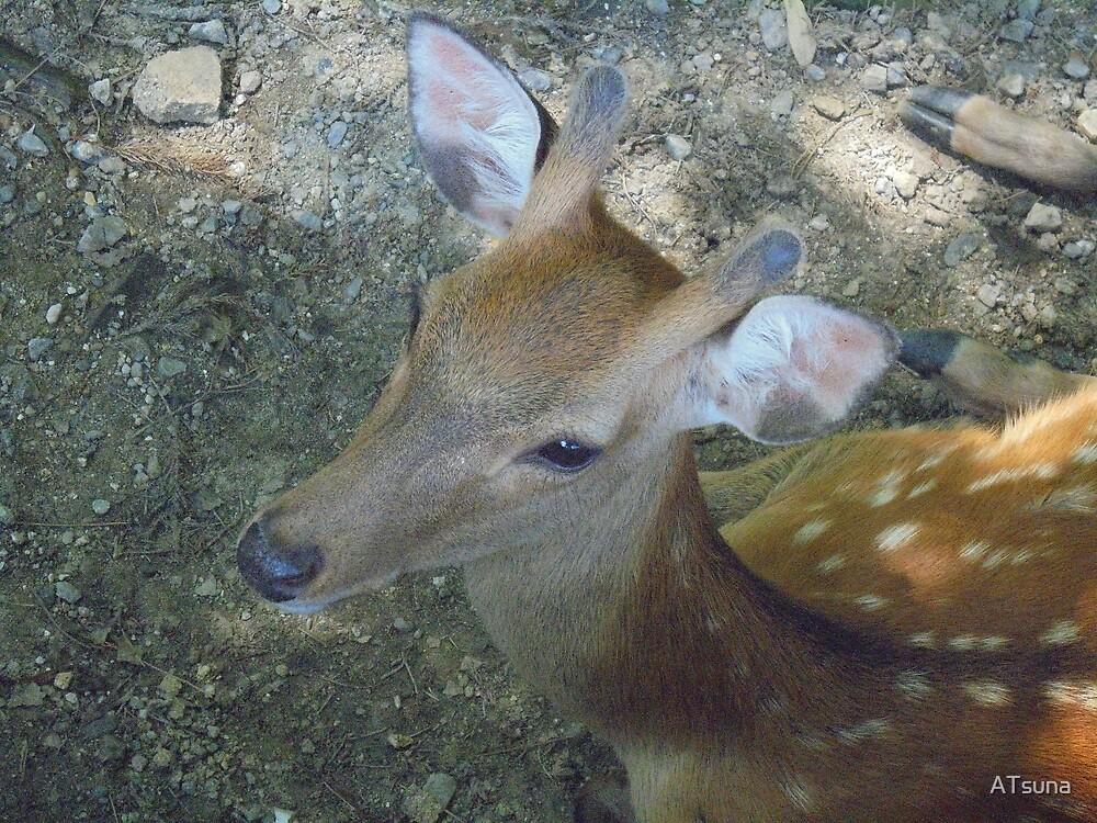 Little Deer Zenek by ATsuna
