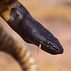 It's a snake-eat-snake world! by Catherine Whitehead