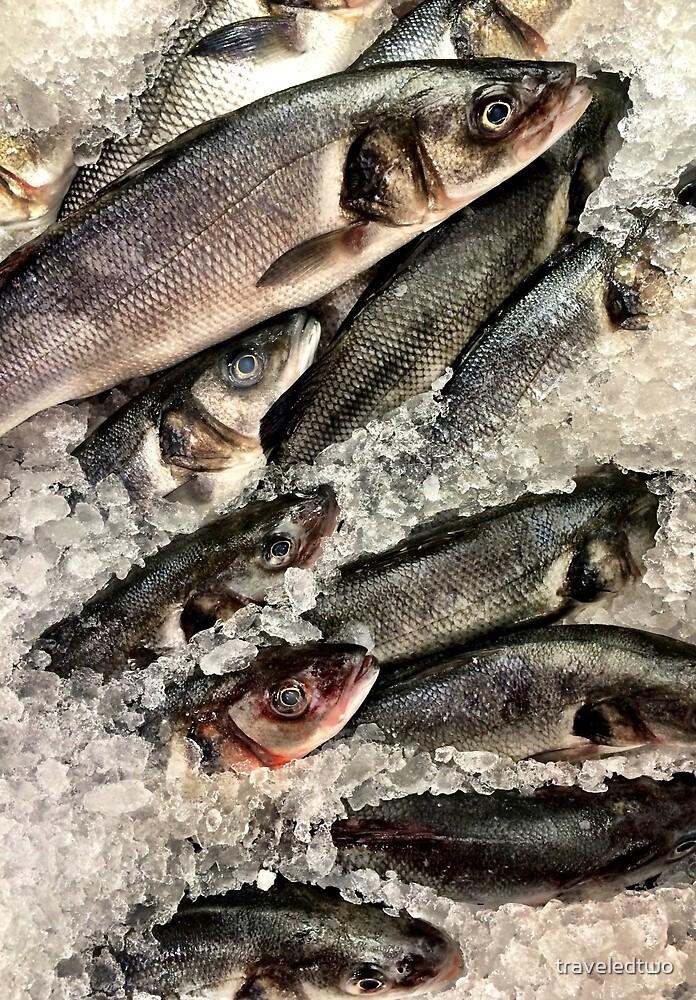 Freshest Fishes by traveledtwo