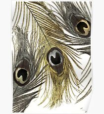 Gold and Silver Peacock Feathers Poster