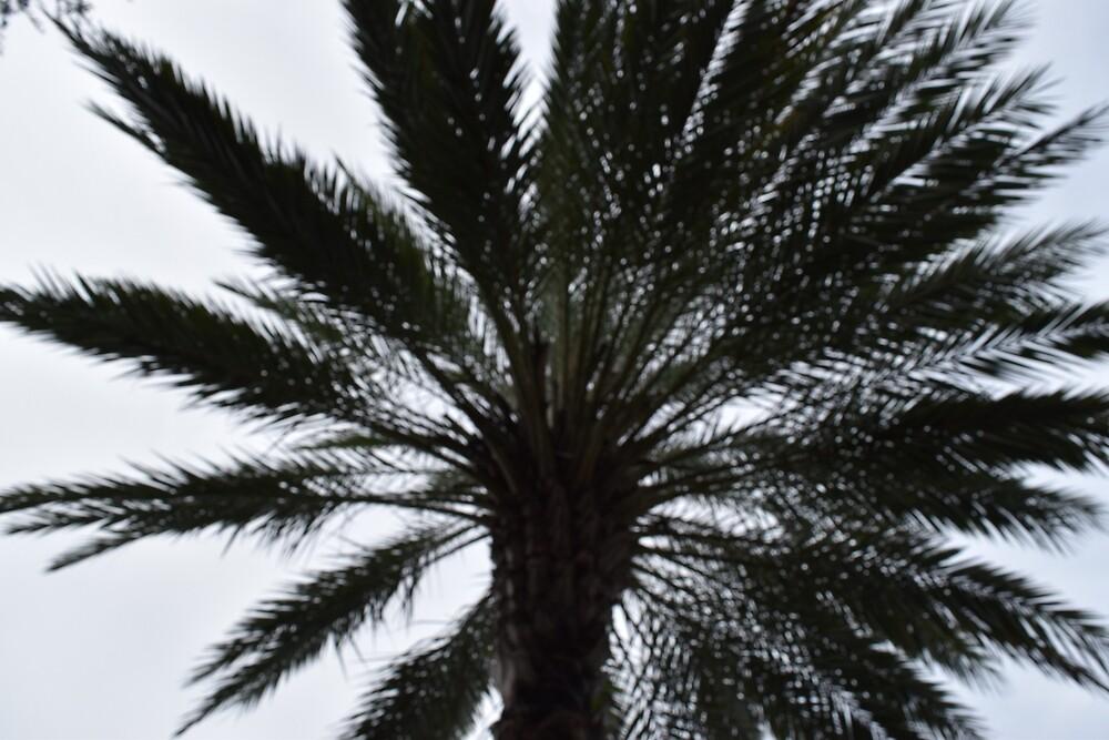 Palm Tree by Megan Wolff