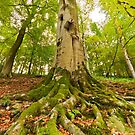 Tree Networking by Stephen Knowles