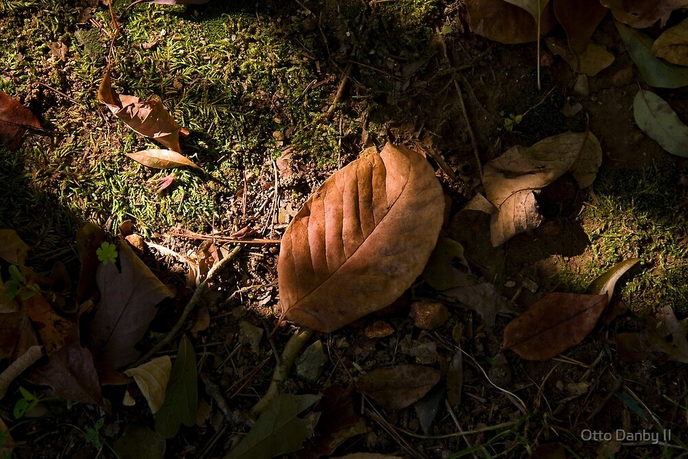 Forest Floor in Fall by Otto Danby II