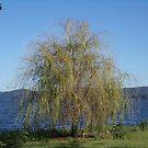 Tree at the River by trisha22