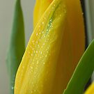 Floral Love Story . (8). by Brown Sugar. Views - 154. by © Andrzej Goszcz,M.D. Ph.D