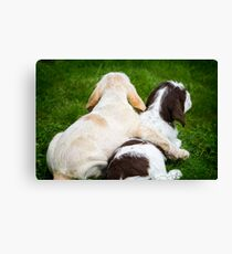 Orange and White and Brown Roan Italian Spinone Puppy Dogs Canvas Print