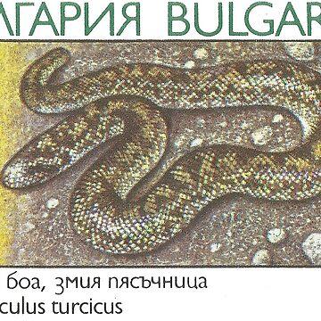 Vintage Bulgarian Stamp - Javelin Sand Boa ( Eryx jaculus turcicus) by staticnomad