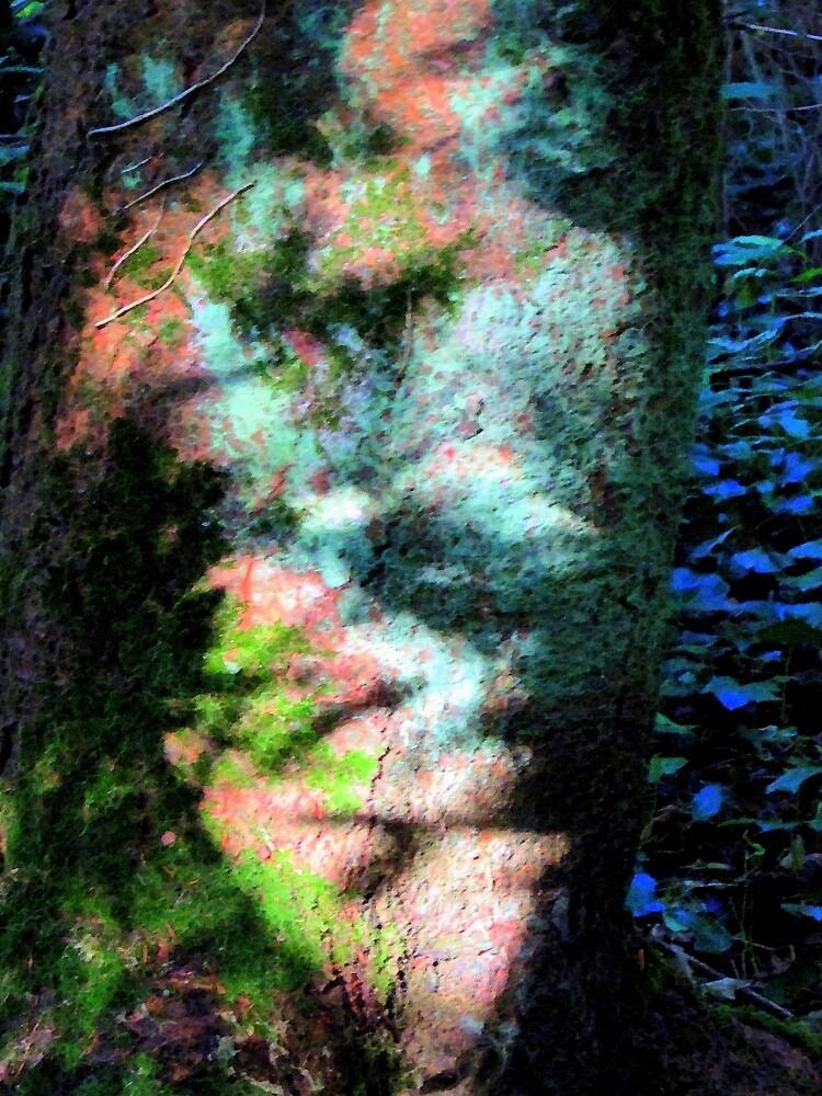 shadows by carlinecasey