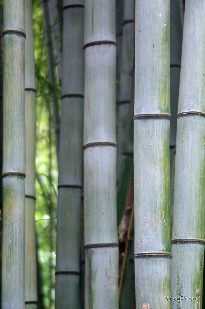 Bamboo Details by WisePhoto