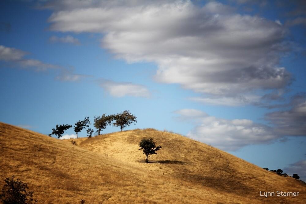Tree on a hill by Lynn Starner