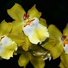 Orchids In Yellow by Mattie Bryant