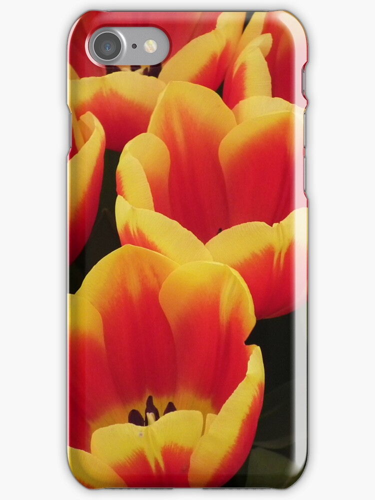 Firey Tulips by Colin Cunningham